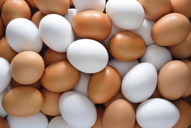 Mô hình làm giàu nhờ gà đẻ trứng toàn lòng trắng